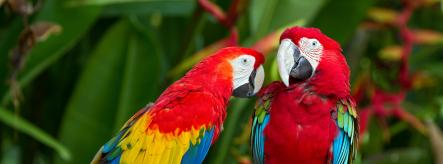 Parrots in the wild