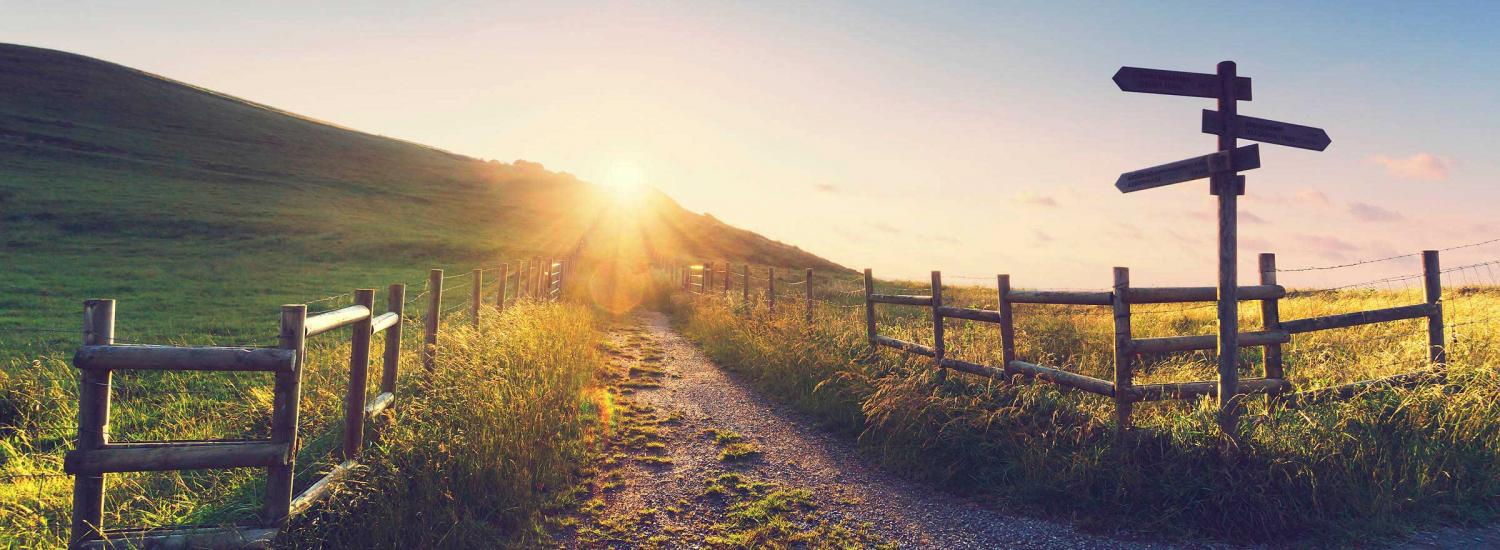 Paths leading in different directions - alternatives to university