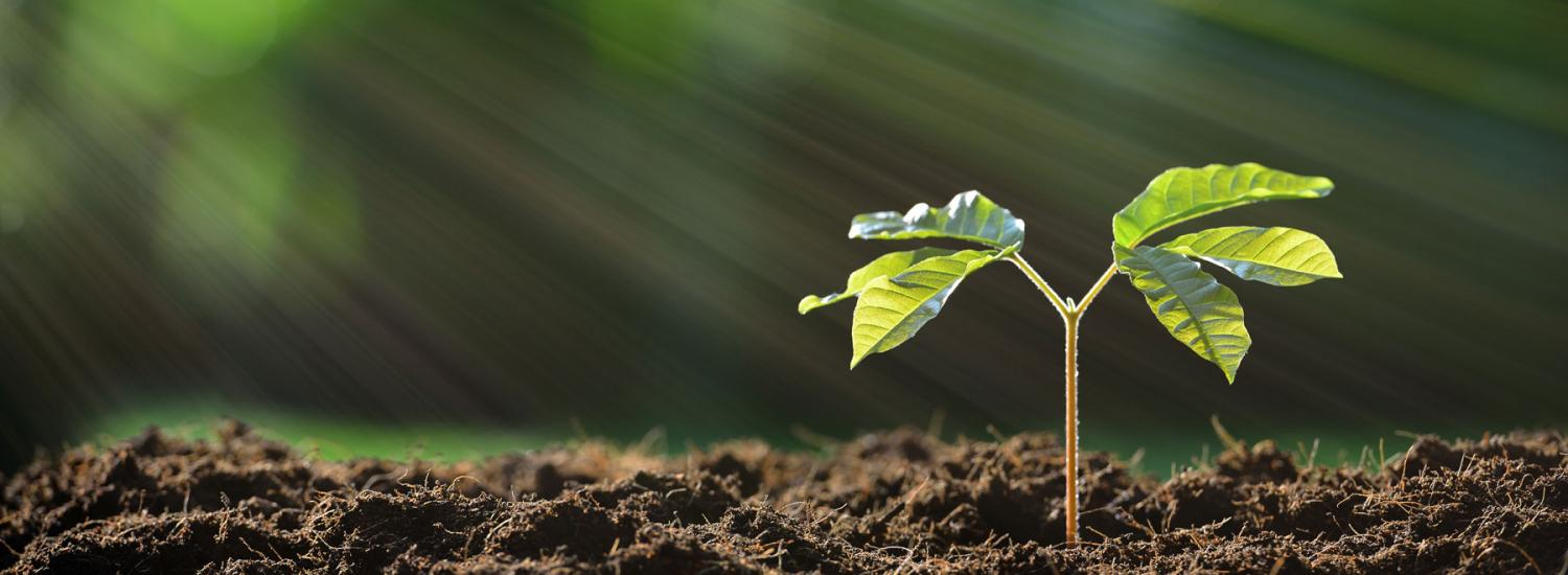 Mental health support - plant growing towards rays of sun