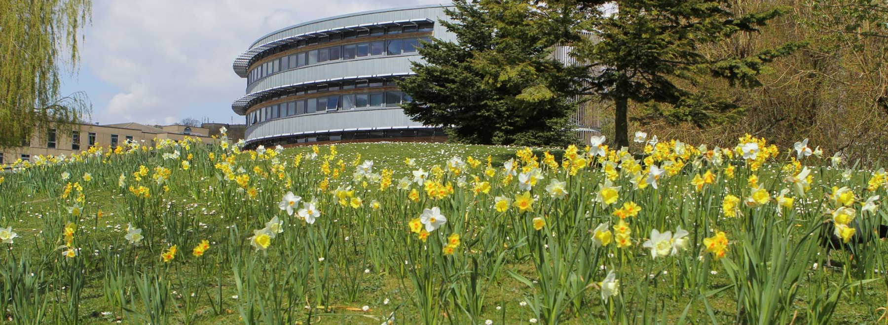 The University of York header