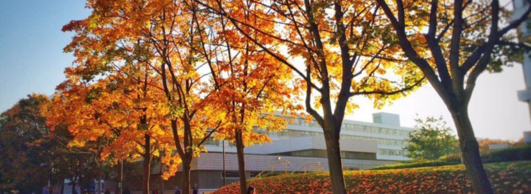 University of Warwick header